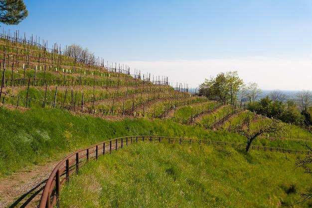 トレッキングパスに沿ったブドウの木の列 Premium写真