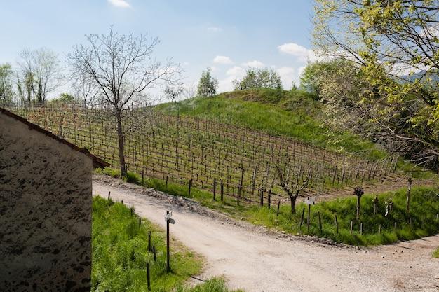 トレッキングパス近くの丘の上のブドウの木とオリーブの木の列 Premium写真