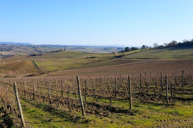 Ряды виноградников с холмов тосканы. итальянское сельское хозяйство. Premium Фотографии