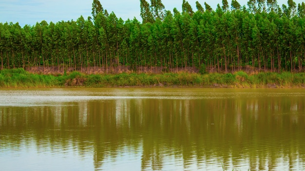 Rows of trees beside the pond Premium Photo