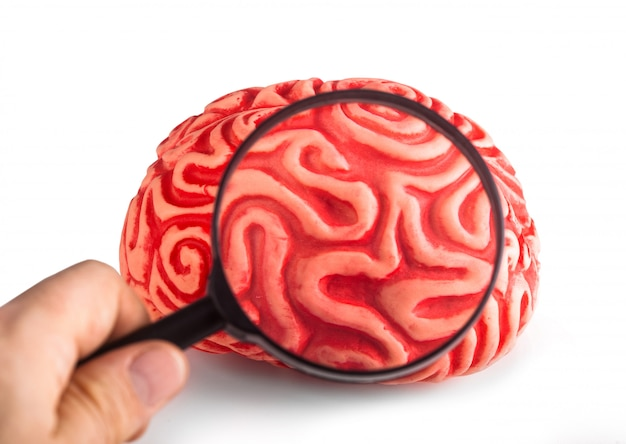 Rubber brain seen with the magnifying glass Premium Photo