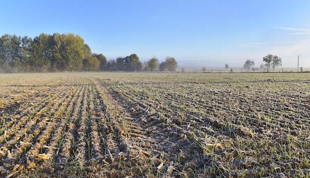 Rural landscape frozen Premium Photo