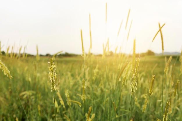 Rural landscape with grass Premium Photo
