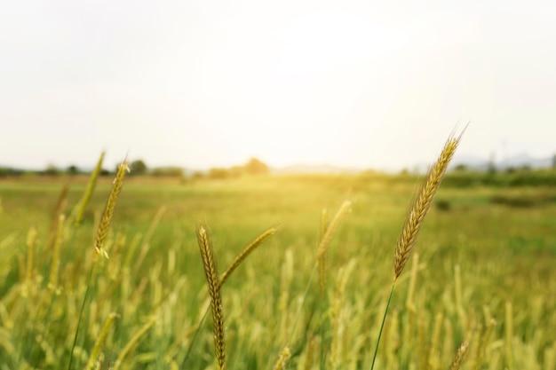 Rural landscape with green field Premium Photo