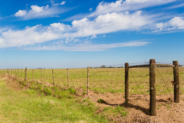Rural landscape with lambrado of the argentine countryside Premium Photo