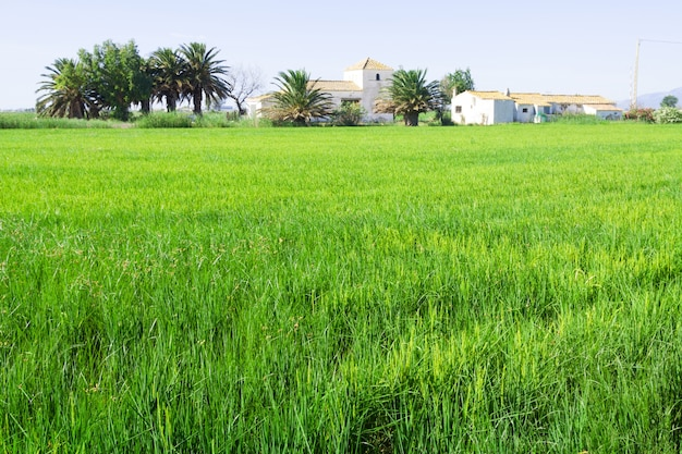 Rural landscape with rice fields Free Photo