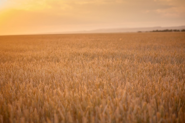 Rural scenery under shining sunlight Premium Photo