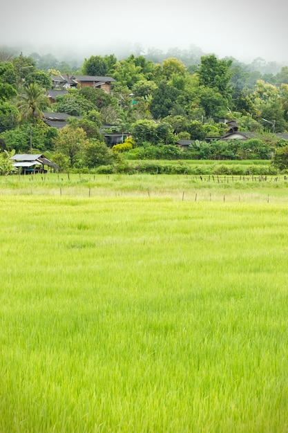 Rural villages of thailand in the asian zone and rice fields among the mountains Premium Photo