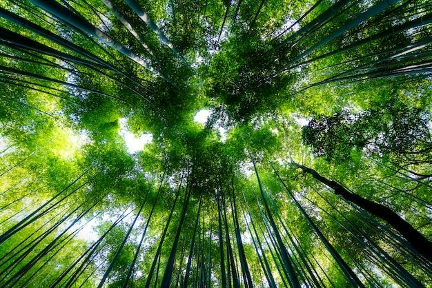 日本の京都の有名な竹林s野 Premium写真