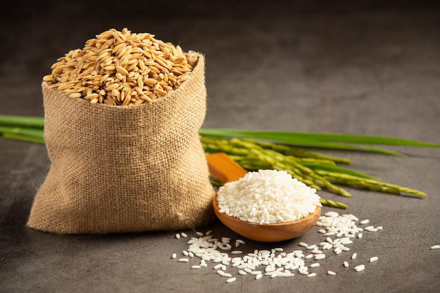 A sack of rice seed with white rice on small wooden spoon and rice plant Free Photo