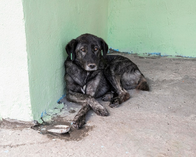 Cane triste in attesa in un rifugio per essere adottato da qualcuno Foto Gratuite