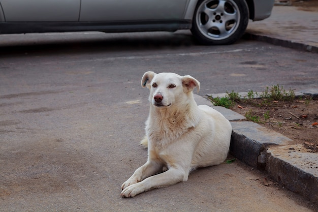 Sad homeless dog Premium Photo