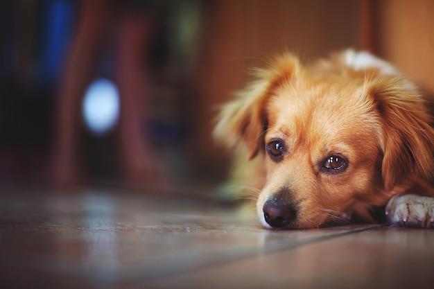 Грустный одинокий бездомный щенок, лежащий на полу Premium Фотографии