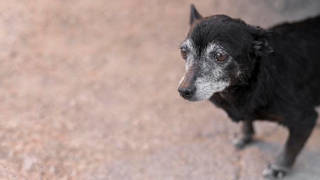 Грустная собака-спасатель в центре усыновления с копией пространства Бесплатные Фотографии