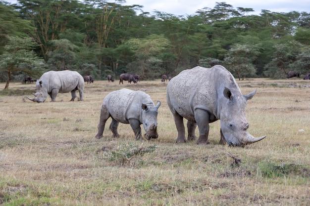 Сафари - носороги на фоне саванны Бесплатные Фотографии