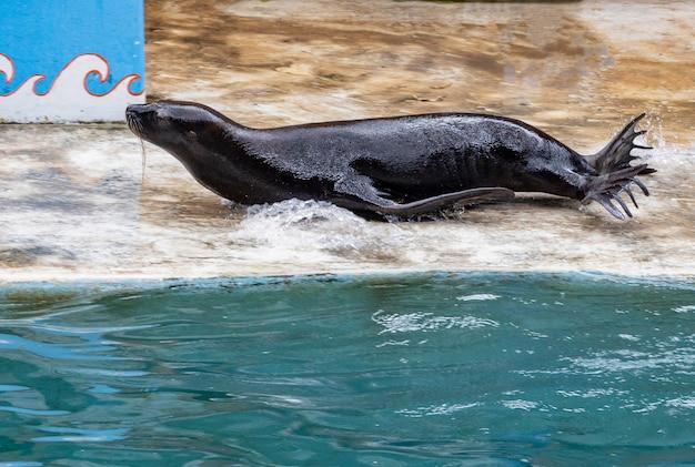 Туристы могут отдохнуть, наблюдая за выступлениями дельфинов и морских львов в safari world park, бангкок, таиланд. Premium Фотографии