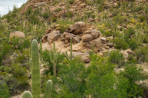Saguaro cactus Free Photo