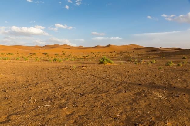 Sahara desert in morocco Premium Photo