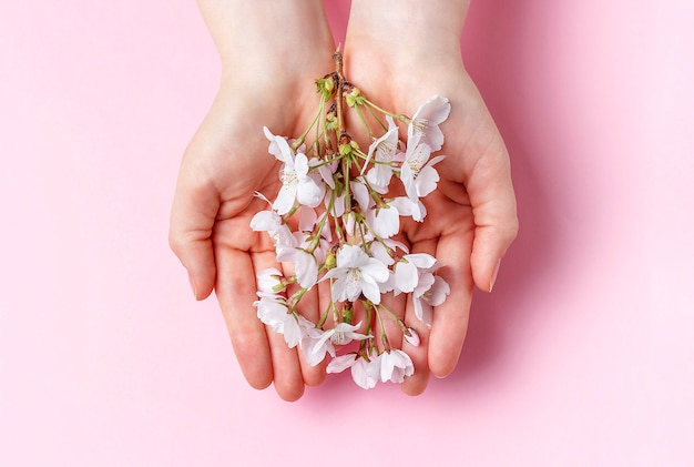 Sakura branch in the female palms on a pink background Premium Photo
