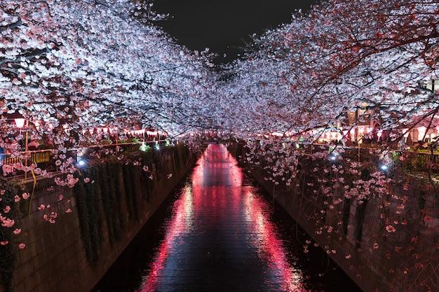 Sakura, cherry blossom flower with light at night in meguro river, tokyo, japan Premium Photo