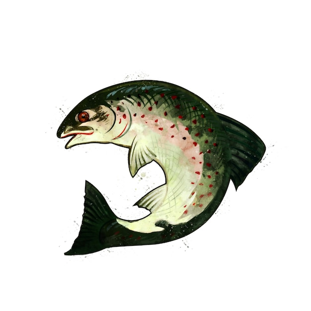 Salmon, watercolor isolated illustration of a curved fish. Premium Photo