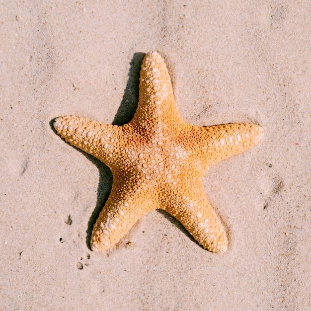 Sand background with starfish Free Photo