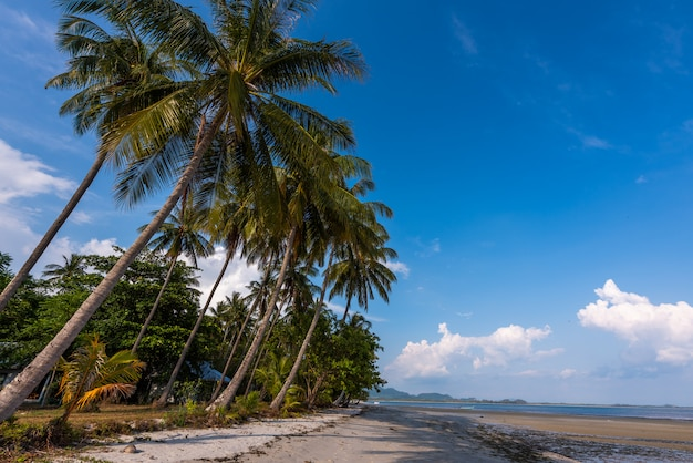 Sand beach with coconut trees with blue sky Premium Photo