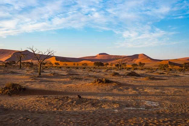 Sand dunes namib desert namib naukluft national park, travel destination in namibia, africa. Premium Photo