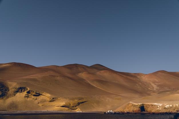 海からのイカ砂漠の砂丘 Premium写真