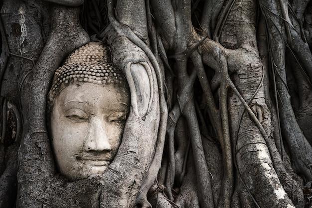 Улыбающаяся голова будды из песчаника в корне дерева бодхи в храме махатхат, аюттхая, таиланд, известном месте назначения в юго-восточной азии. Premium Фотографии
