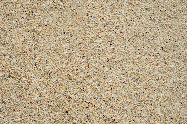 Sand texture background, small shells broken coral , natural sand at the beach close up. Premium Photo