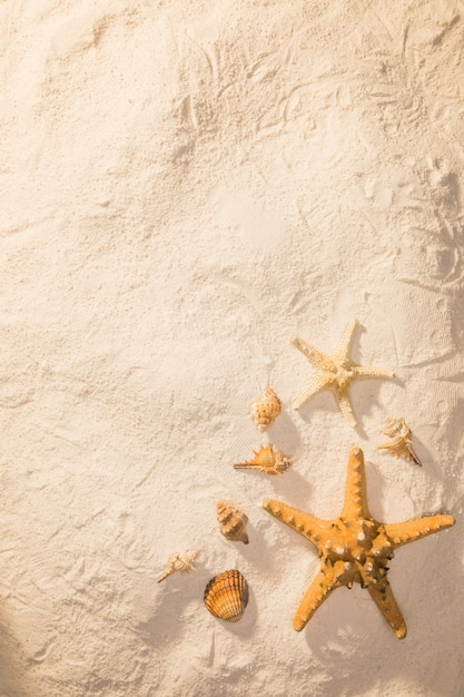 Sand with dried sea creatures Free Photo