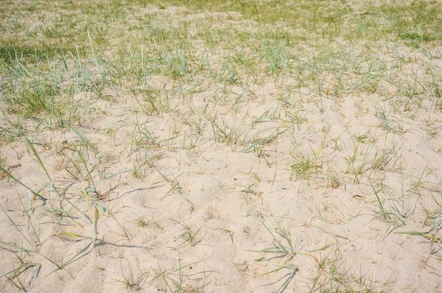 草が生えている砂地 無料写真