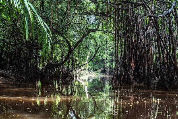 Sang nae運河タイのパンガーのリトルアマゾン Premium写真