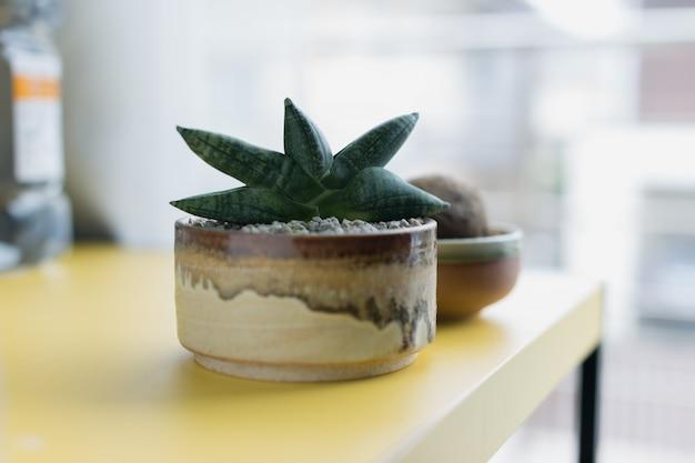 Sansevieria boncellensis в керамическом горшке Premium Фотографии