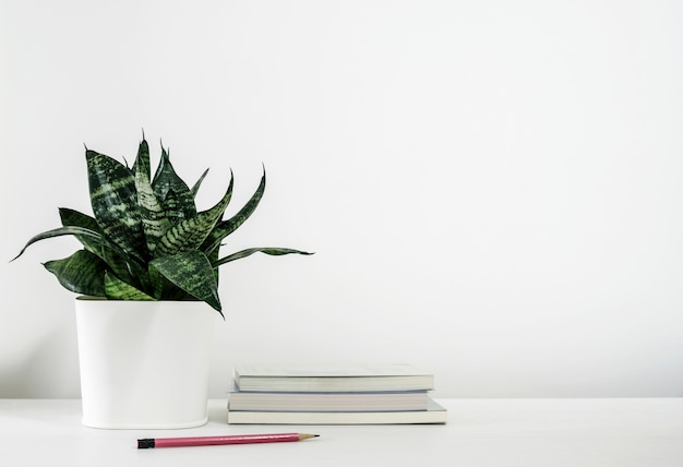 Sansevieria trifasciata or snake plant in pot and book with pencil on the white wooden table Premium