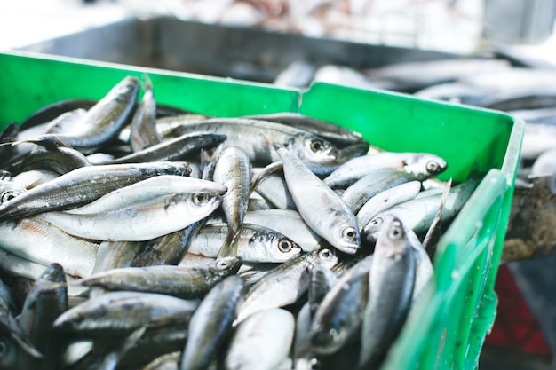 Sardines for sale in container Free Photo