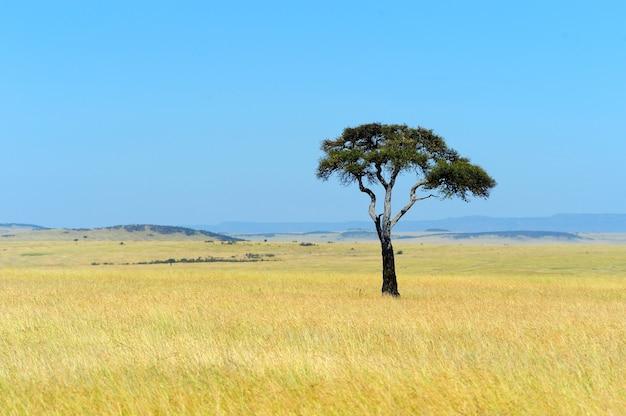 ケニアの国立公園のサバンナの風景 無料写真
