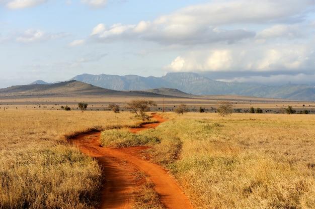 Paesaggio della savana nel parco nazionale in kenya, africa Foto Gratuite