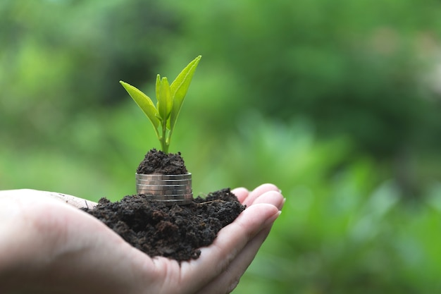 Saving money concept with hand holding money coin stack and plant. Premium Photo