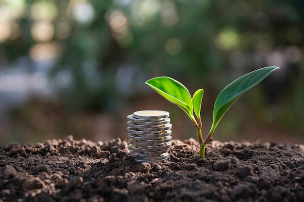 Saving money concept with money coin stack growing for business. Premium Photo