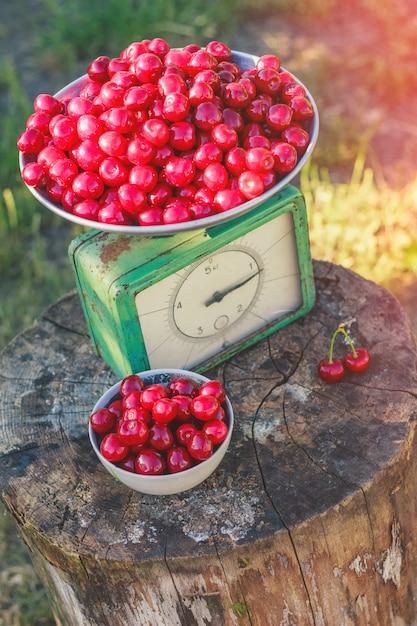 Scales drunk cherry harvest Premium Photo