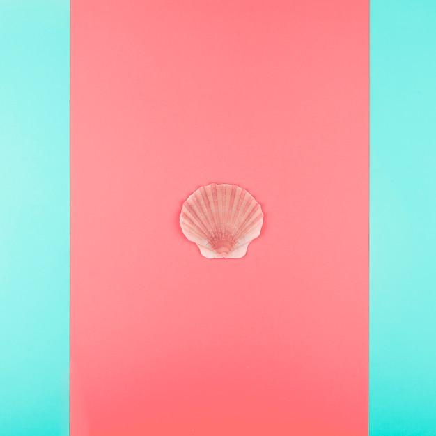Scallop seashell on coral and mint background Free Photo