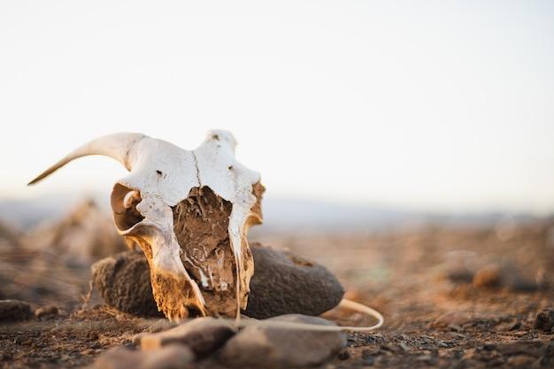 Teschio di capra spaventoso nel deserto con un cielo bianco Foto Gratuite