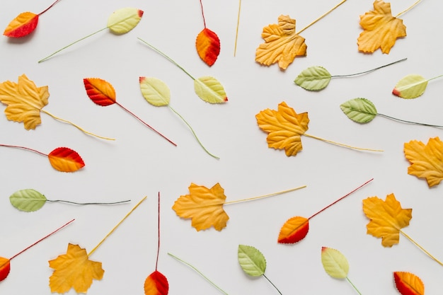 Scattered autumn leaves on white background Free Photo