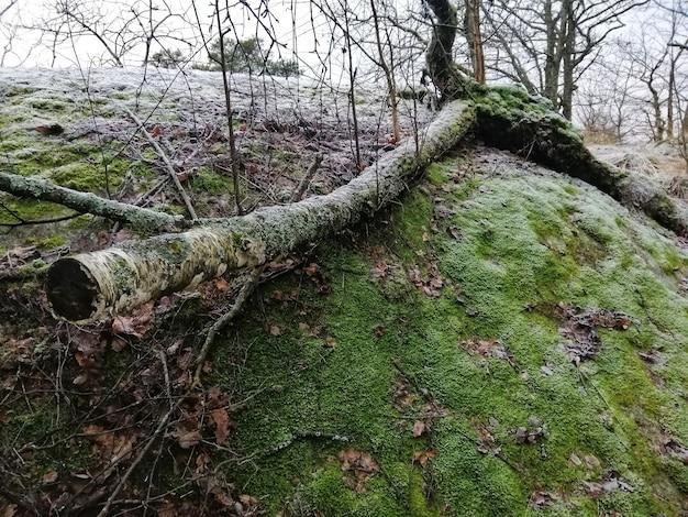 ノルウェー、ラルヴィークの緑の森の風景 無料写真