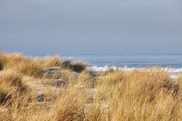 オレゴン州キャノンビーチでの朝のビーチグラスの風景 無料写真