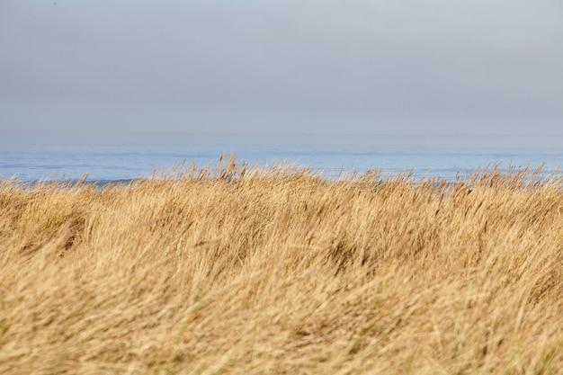 Пейзаж пляжной травы утром в кэннон-бич, орегон Бесплатные Фотографии