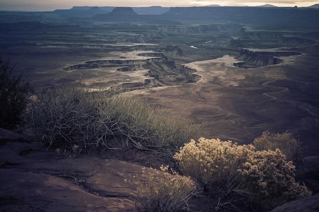 峡谷の丘の真ん中に生育するさまざまな種類の植物の風景 無料写真