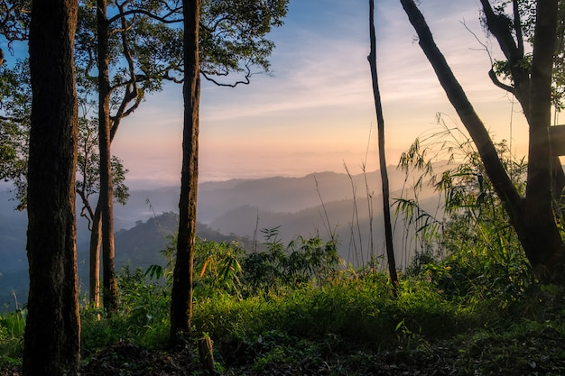 Scenic forest sunrise hill at national park Premium Photo